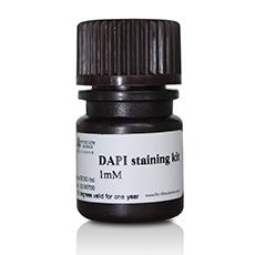 DAPI染色试剂盒